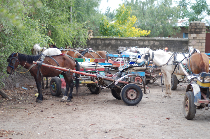 Horses in Ethiopia