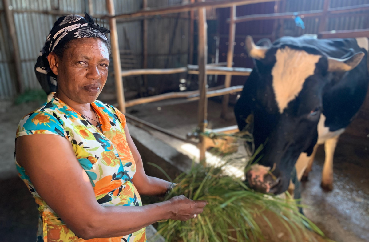 Ethiopian livestock owner and her local bred cow